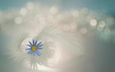 Messaggi dai Maestri: il conforto della nostra vera essenza